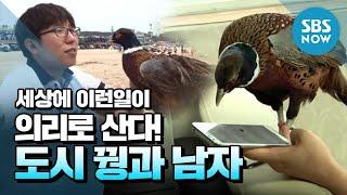 getlinkyoutube.com-SBS [세상에이런일이] - 도시 꿩 꾸꾸