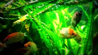 getlinkyoutube.com-Virtual Aquarium Meditation (Full HD)