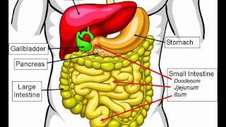 getlinkyoutube.com-DISEASES OF DIGESTIVE SYSTEM , HEALTH EDUCATION , INFECTION CONTROL (ICSP) , URDU / HINDI