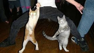 getlinkyoutube.com-Funny dancing cats and dogs - Cute animal compilation