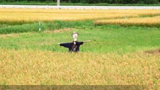 getlinkyoutube.com-【カラオケ・歌ってみた】案山子/さだ まさし cover by Tsuki