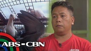 Tapatan Ni Tunying: Life in pigeon racing