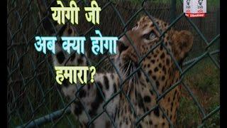 योगी सरकार का उत्तराखंड में भी पड़ रहा असर, हरिद्वार के शेरों के लिए भी गहराया संकट