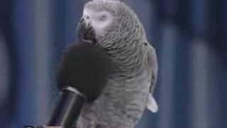 getlinkyoutube.com-El Loro Imitador De Animales