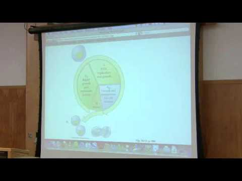 DNA Synthesis (DNA Replication), Part 5 of 6