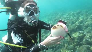 MARES manekenka in najbolj strupena riba