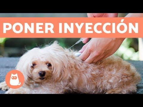Cómo poner una inyección al perro