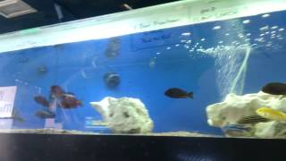 getlinkyoutube.com-How new fish act when they are stressed!