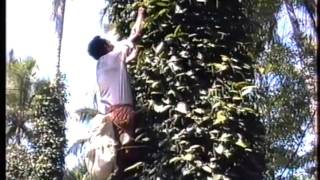getlinkyoutube.com-Pepper in India