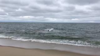 getlinkyoutube.com-Shark attack at High Head