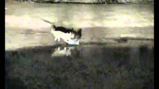 getlinkyoutube.com-GRAPHIC: Jackal Kills Giant Eagle Owl at Pete's Pond 7-11-2013