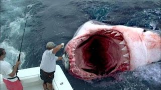 getlinkyoutube.com-サメが、シャークが大襲撃! 世界記録(?)600キロのサメに、巨大ザメ食べる謎の生物など、一挙紹介!- ニュースまとめ