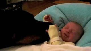 getlinkyoutube.com-Joy Rottweiler 38Kg & Zoé bébé 2,6kg