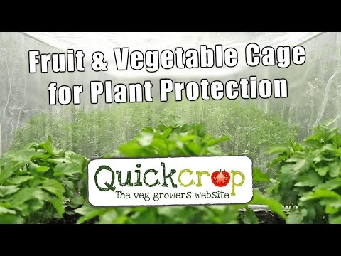 Fruit & Vegetable Cage for Plant Protection
