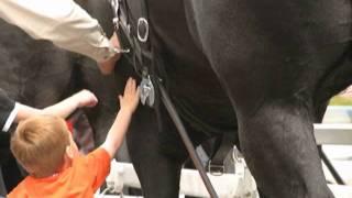 getlinkyoutube.com-World's Largest Horses Texas Thunder by Guy McLean