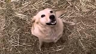 getlinkyoutube.com-Странная Дружба Слона и собаки!!! Очень удивительно!!!