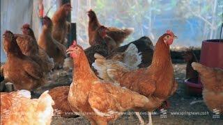 getlinkyoutube.com-เศรษฐีเกษตร 8/3/58 : ฟาร์มเลี้ยงไก่ไข่อินทรีย์