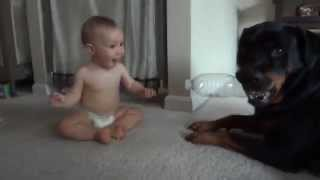 getlinkyoutube.com-Rottweiler and Baby Playing With Plastic Bottle