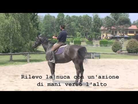 Francesco vedani - Lavoro sul salto e concorso s.o. parte 1