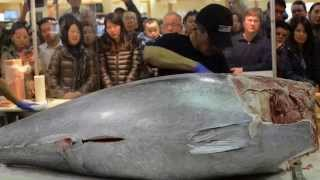 getlinkyoutube.com-$10,000 Knife Cuts Bluefin Tuna like Butter Part 2