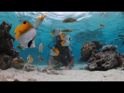 Cook Islands, Diving and Dining Experiences, Holiday travel video guide - Part 2