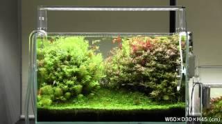 getlinkyoutube.com-[ADA view 395] Follow-up video of NA Gallery aquariums.