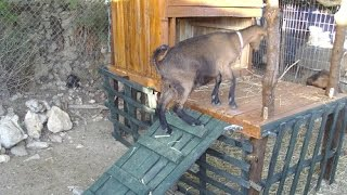 getlinkyoutube.com-Ξύλινο σπιτάκι με παλέτες για κατσίκια