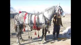 Hamuri cai