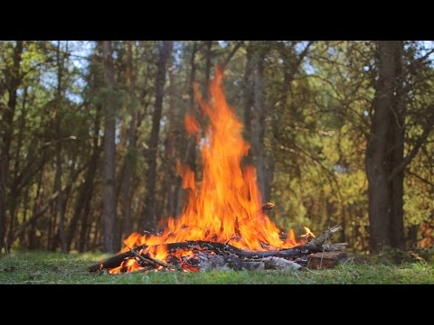 10 Ways to Make Fire - Natural Tinders