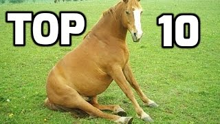 getlinkyoutube.com-Top 10 Funny Horse Videos Compilation 2016    NEW HD