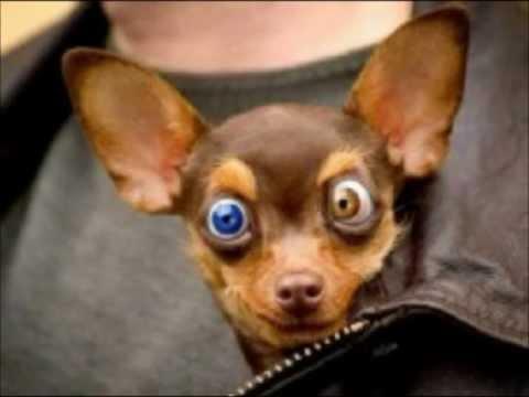 Videos Engraçados de cachorros