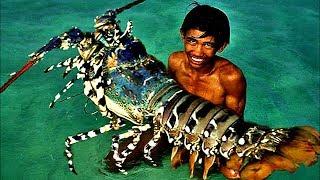 getlinkyoutube.com-Top 5 Biggest Lobsters Ever Caught