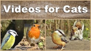 getlinkyoutube.com-Videos for Cats to Watch - The NEW Ultimate Birds and Squirrels Compilation Video