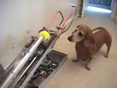 Máquina de enganar cachorro! Atirador de bolas! Pega!