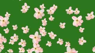 getlinkyoutube.com-Flower fall green screen free hd