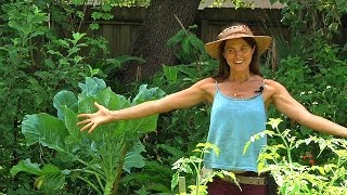 getlinkyoutube.com-Permaculture Paradise: Val & Eli's Summer Abundance Part 1!