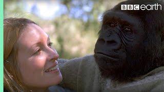 Did you know there's a talking gorilla?   #TalkingGorilla   BBC