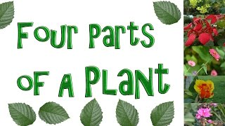 The Four Parts of a Plant - Roots, Stem, Leaf, and Flower