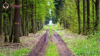 getlinkyoutube.com-2시간 연속 듣기 | 한적한 숲 속 소리와 연주곡 | 릴렉스 피아노 | 뉴에이지 연주곡