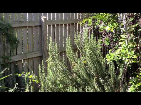 Herb Garden Tour and Herb Magic Talk