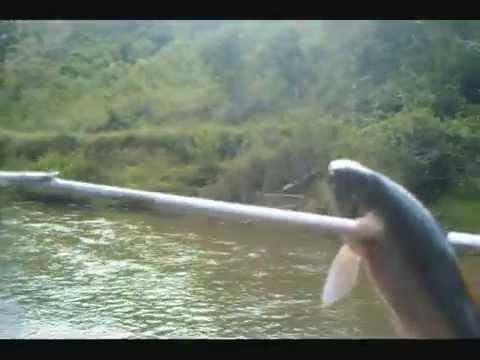 pescando con arpón