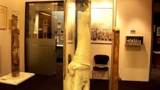 getlinkyoutube.com-The Icelandic Phallological Museum 2014