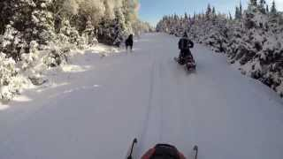 getlinkyoutube.com-Moose jumps out at snowmobile Pittsburg Nh