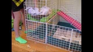 getlinkyoutube.com-Cleanin Da Piggie Cage w/ Musico!