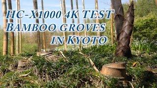 getlinkyoutube.com-HC X1000 4k test. Park of bamboo groves in Kyoto 京都向日市 黄金色の竹林公園