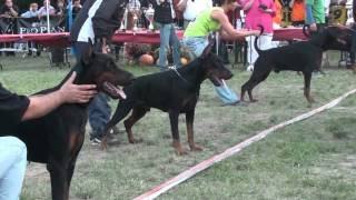 getlinkyoutube.com-IDC 2011 - Black Males Final - The Dobermann - www.the-dobermann.com