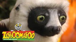 Zoboomafoo 225 - Brain Power (Full Episode)