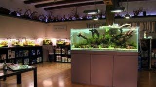 getlinkyoutube.com-ANIMALISCH die Tiersendung Nr. 10 @ Der erste Aquascaping Shop der Schweiz. MYSCAPE.ch