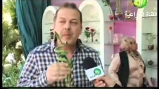 اهمية و زراعة نبات البامبو