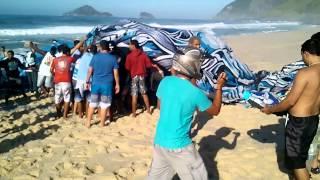 getlinkyoutube.com-Resgate de Balão na areia da praia do Recreio